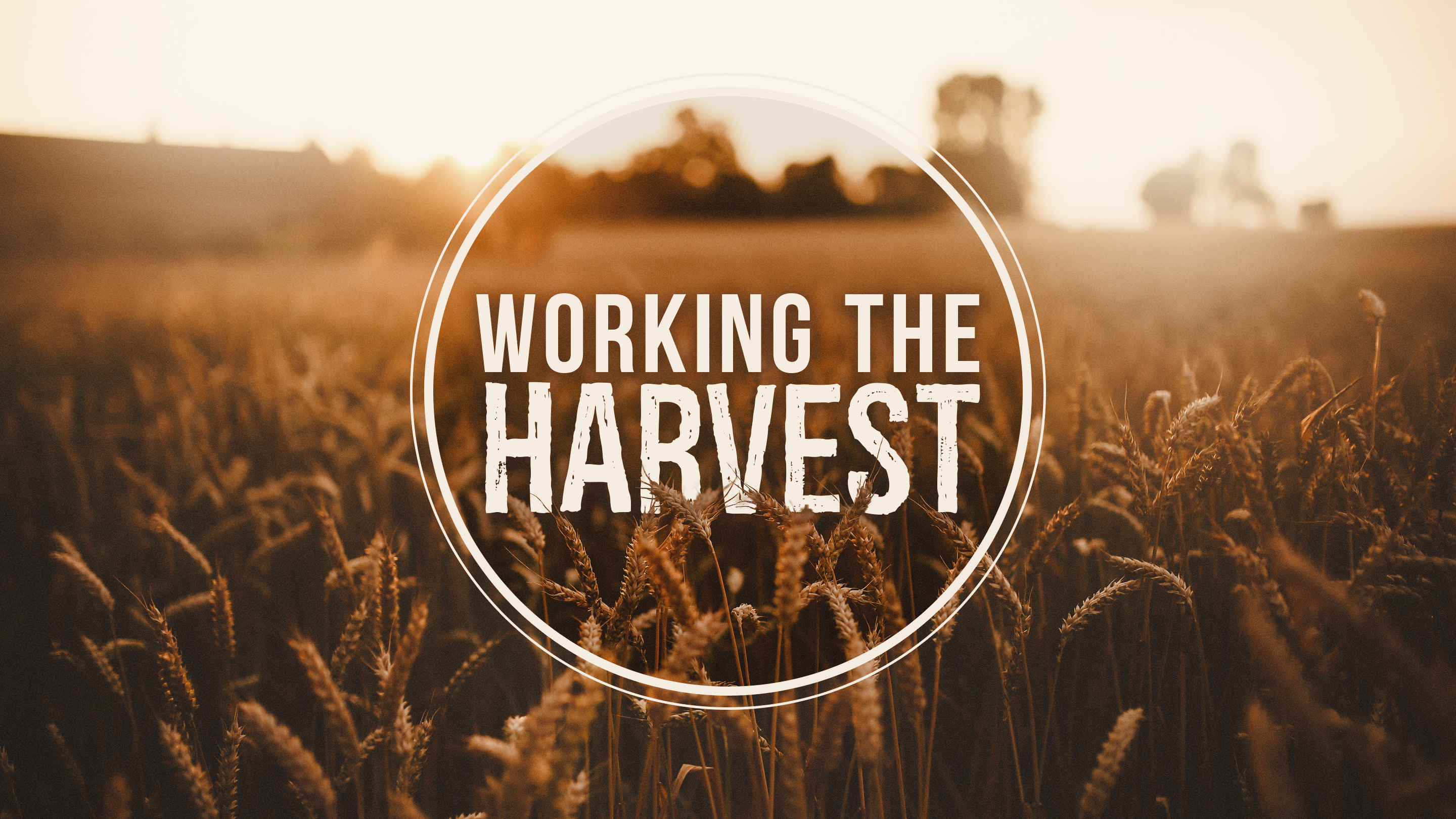 working-the-harvest-sermons-image